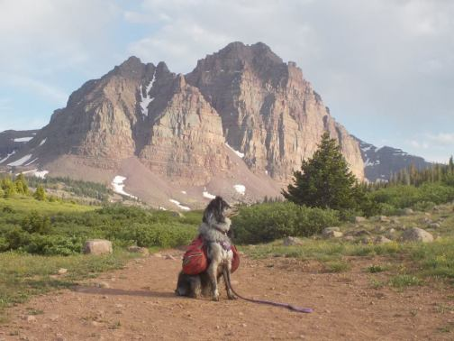 backpacking dog